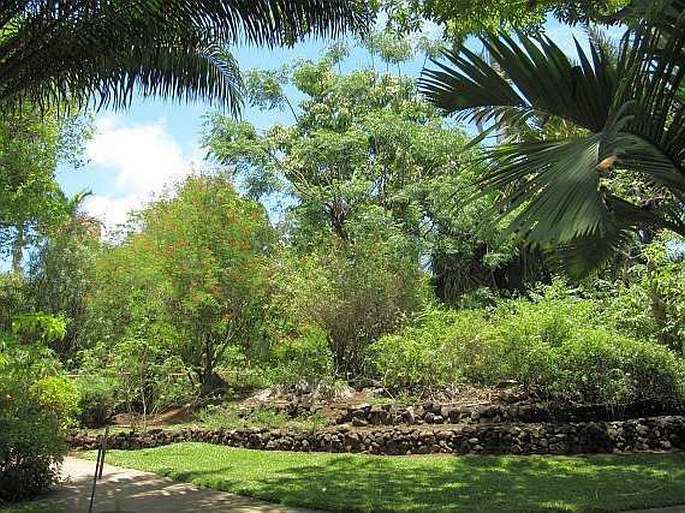 Zahrady Sveta Reunion Saint Gilles Les Bains Jardin D Eden