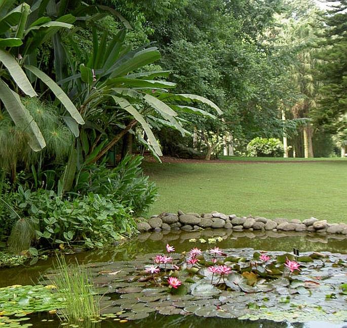 Zahrady sv ta mexiko xalapa jard n bot nico for Jardin botanico u de talca