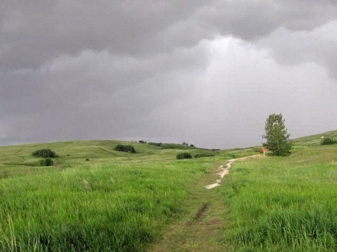 Nose Hill Park and Confluence Park